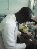 Leonard Kilekwang '16 works with mice in the lab.
