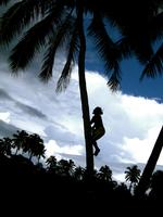 Second Place: 'Samoan Climbing For Coconuts' by Andrea Weinfurter '10