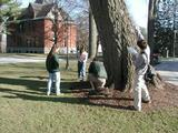 Diggins and students search for acorns to identify this species of oak