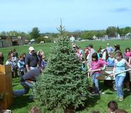 Hamilton Arboretum director Terry Hawkridge, left, supervises planting of the Colorado Spruce at Clinton Elementary School.