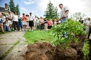 Lead horticulturist Dan Rouiliier shows how to plant a peony at the A.P. Saunders Tree Peony Fest.