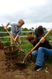Food Seminar students harvest potatoes in The 1812 Garden.