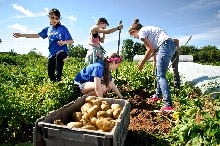 As part of a XA trip, students spent the day at the Old Path Farm harvesting veggies and spent the evening cooking them for dinner. <br />Photo: Nancy L Ford