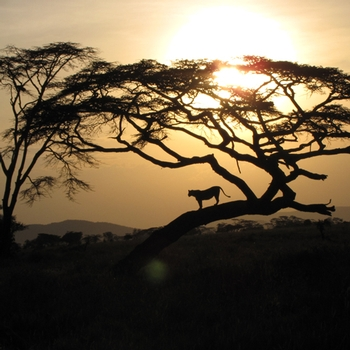 Tanzania<br />Photo: Calvin Johnson &apos;10