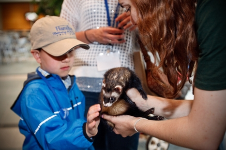 Luke Vanderlan, 7, pets Sugar the ferret. Photo by Laura C. Laurey.