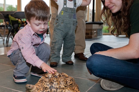 Theodore Lentze, 3 1/2, pets Leo the leopard tortoise while his brother Nicolas, 18 months, and Utica Zoo volunteer Kathleen Mallory look on during a visit from the Utica Zoomobile.