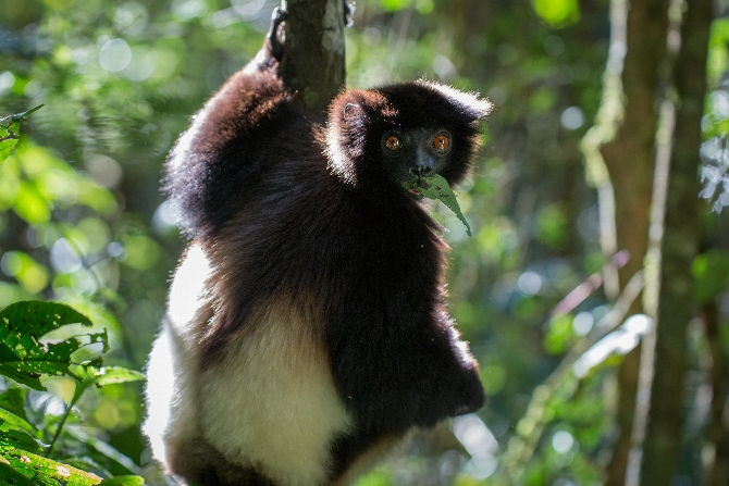 Katie Guzzetta '18 Gets Up Close and Personal With Lemurs of Madagascar