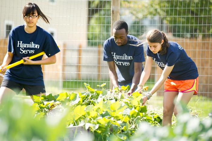 Victoria Lin '15, Olu Ogunwomoju '15 and Talia Bloom '15 pull weeds in a For the Good Garden in Utica. PHOTO: BY NANCY FORD