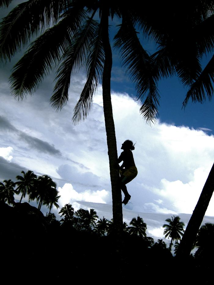 Second Place: 'Samoan Climbing For Coconuts' by Andrea Weinfurter '10 PHOTO: ANDREA WEINFURTER '10