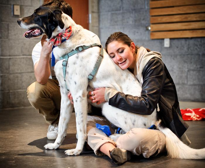Molly Lazio '14 hugs Snickers during Paws to Relax on April 27. PHOTO: BY NANCY FORD