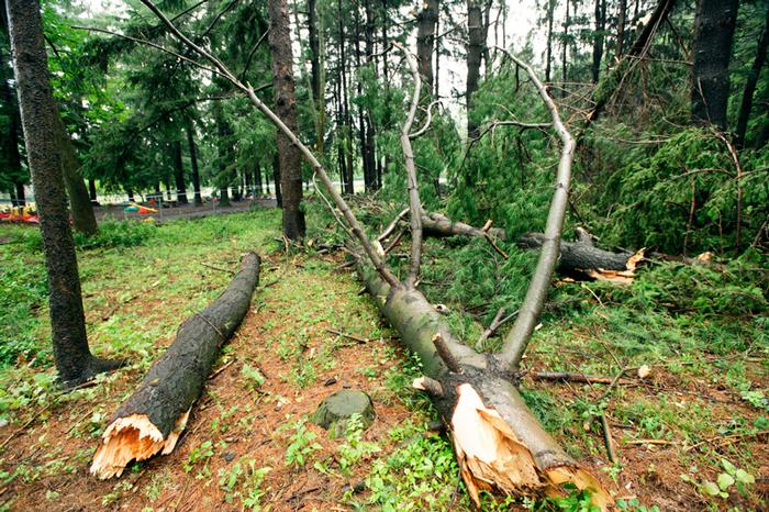 PHOTO: NANCY FORD