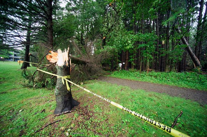 PHOTO: BY NANCY FORD