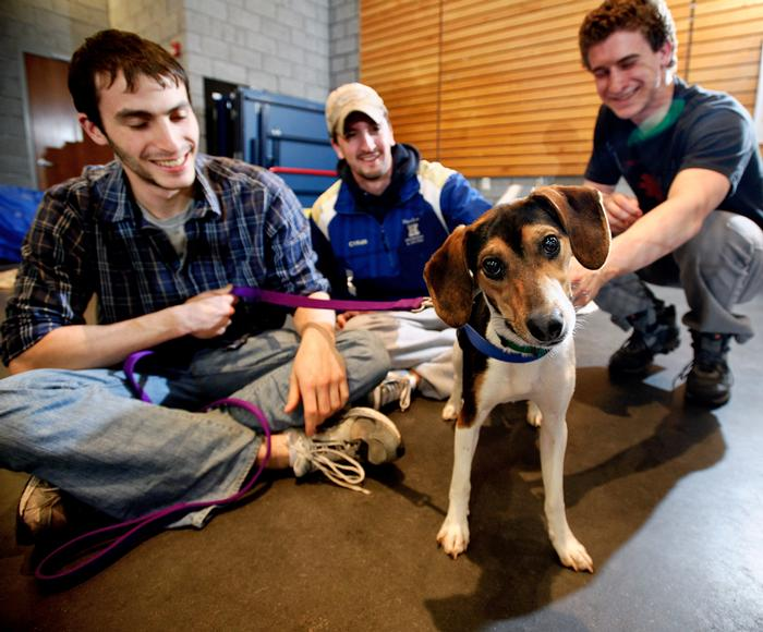 Steve Pet '12, Tom Cyran '12, and James Crafa '12 play with Triscuit. PHOTO: BY NANCY FORD