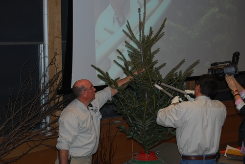 Dan and Terry remove problematic branches on a Canaan fir tree