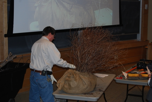 To conclude the lecture, Dan demonstrates how to prune Gold Flame spirea