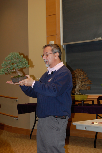 Bill discusses the characteristics of bonsai; this speciman is Little Gem Dwarf Spruce Picea abies 'Little Gem'.