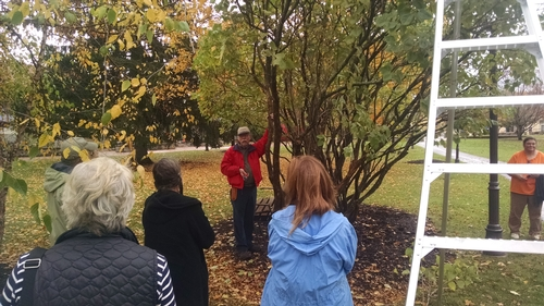 "Jack Alexander of Harvard's Arnold Arboretum demonstrates proper lilac pruning after his talk entitled ""Lilacs: A Purple Haze"" on Saturday, October 17, 2014."