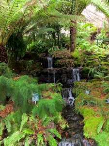 We visited the Fern Tree House at the Hobart Botanical Gardens and saw the three species native to Tasmania.