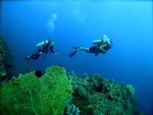 (Figure 1) Jamie McLean '15 and Madison Beres '15 enjoying an introductory dive through Thetford Reef.