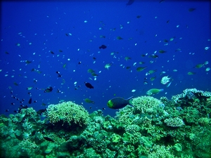 (Figure 4) An example of the vast and beautiful species diversity evident everywhere on the reef.