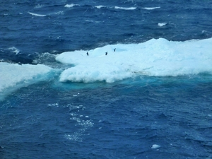 Penguins that were once lounging on an iceberg flee at the sight and sound of the Palmer.