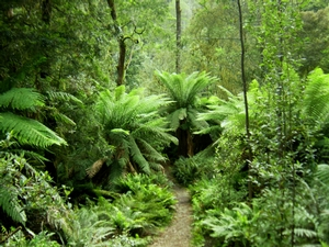 A foot trail in Hellyer gorge shows some of the diverse plant life present in the forests of Tasmania.