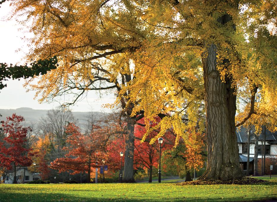 A Ginkgo tree on Hamilton's campus
