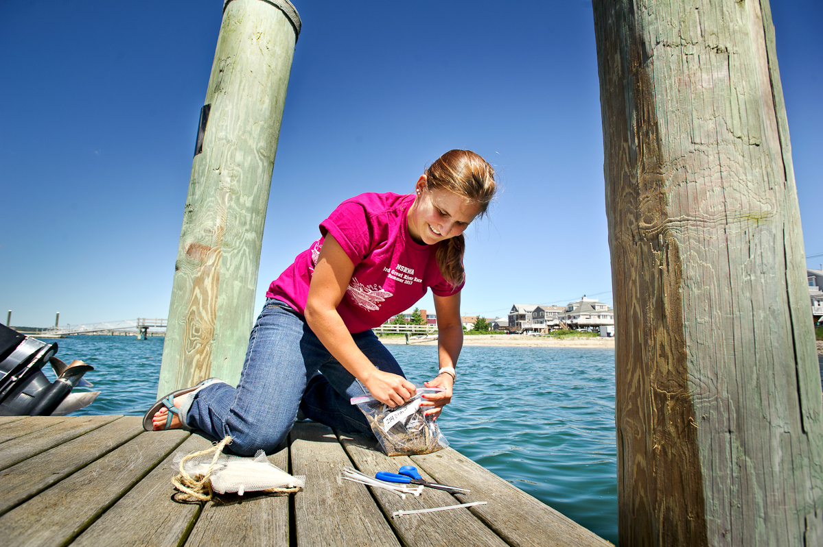 Emily Pitman '15 collects an experimental tile from an inlet on the Atlantic Ocean.