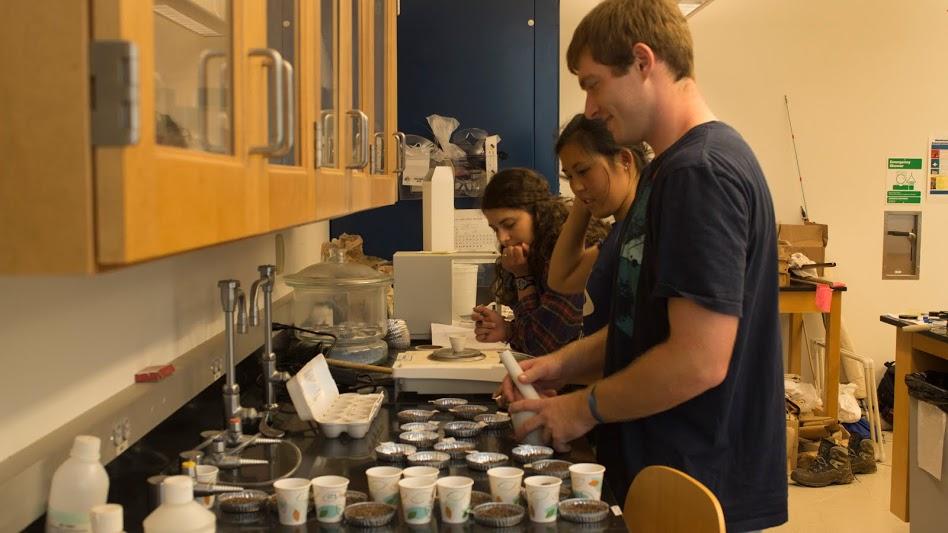 From left, Samantha Mengual, Zoe Tessler and Daniel O'Shea check garlic mustard samples in the lab.