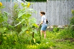 Amelia Mattern &apos;12 weed-wacks in a Good Garden on Linwood Place in Utica, N.Y.<br />Photo: Nancy Ford